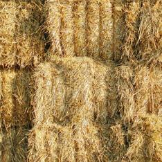 débats avec la confédération paysanne de creuse